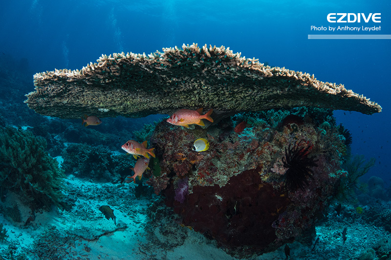 Tubbataha's Reefs