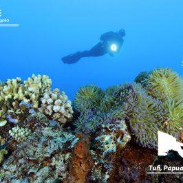 图菲:屋礁魔力漫潜