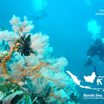 Forgotten Islands of the Banda Sea