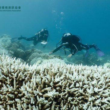 全民可參與的海洋保育行動──2021台灣珊瑚礁體檢活動開跑囉!